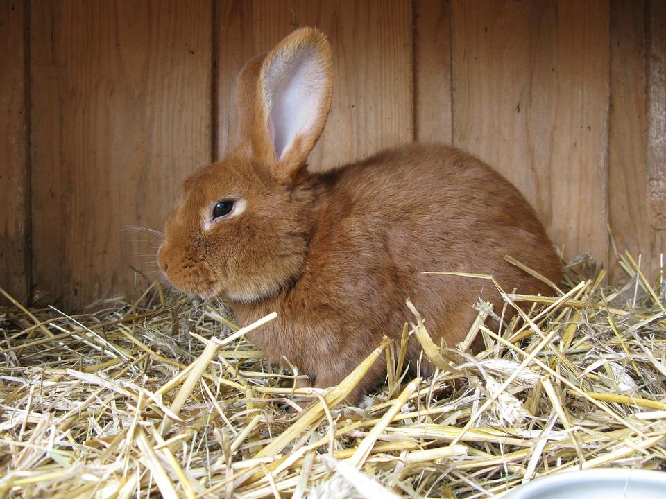 milben beim kaninchen bek mpfen ratgeber hilfe was tun. Black Bedroom Furniture Sets. Home Design Ideas