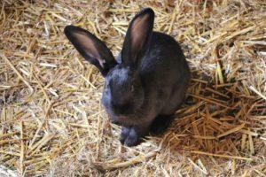 Milben im Kaninchenstall