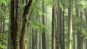 Frische Luft wie im Wald